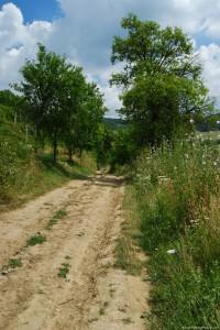 dirt-path