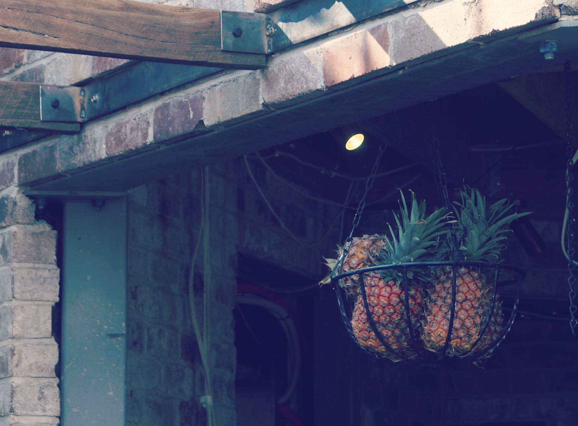 Pineapples, the grounds.