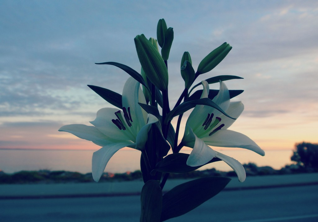 Flowers, beach, inspiration
