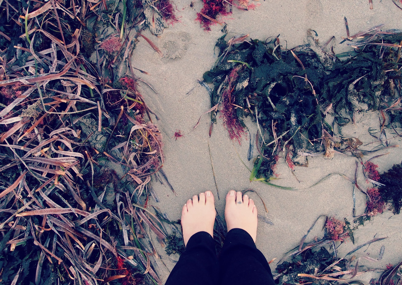 Beach, Seaweed.